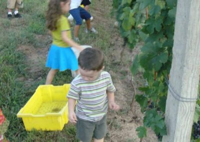 morais-vinyards-and-winery-the-winery-process-harvest-3-400x284 Process